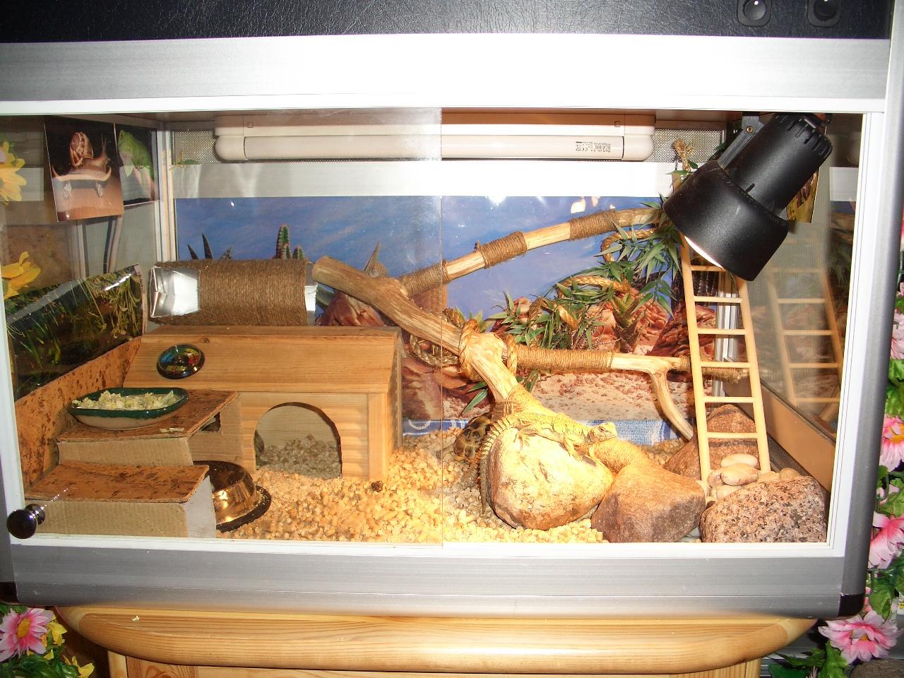 Дом для черепахи своими руками